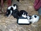 Poszukujemy domu dla kotków